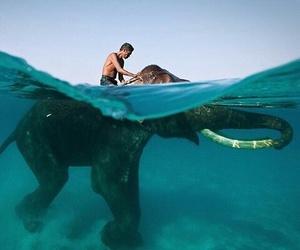 elephant, animal, and ocean image