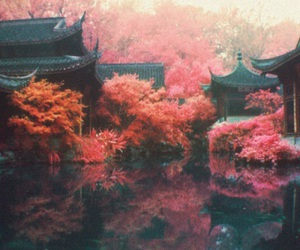 china, tree, and forest image