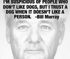 dog, quote, and bill murray image