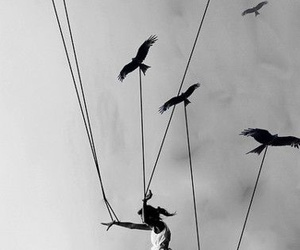 bird, fly, and black and white image