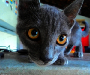 cat, cute, and ears image