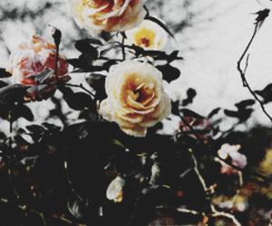 dark, flower, and grunge image