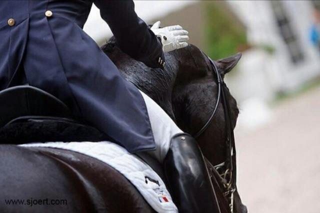 rider, dressage, and equestrian image