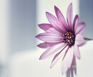 beautiful, natural, and flower image