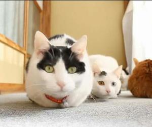 cats, chibi, and mimi image