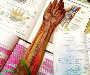 anatomy, nights, and studying image