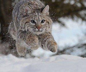 snow, cat, and animal image