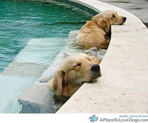 dog, pool, and swimpool image