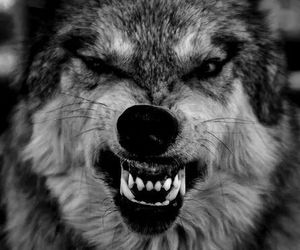 wolf, quotes, and lion image