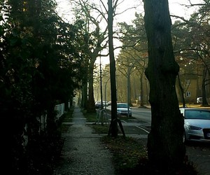 berlin, nature, and winter image