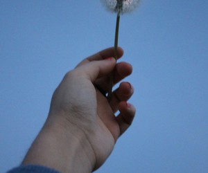 flowers, hand, and dandelion image
