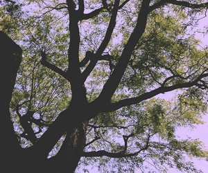 colorful, green, and tree image