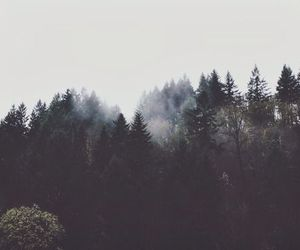forest, alternative, and fog image
