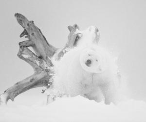 Antarctic, photos, and arctic image