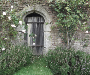 indie, flowers, and garden image