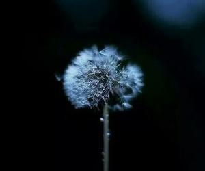 alternative, flowers, and wish image