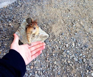 animal, cute, and squirrel image