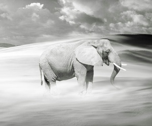 elefant and wallpapers image