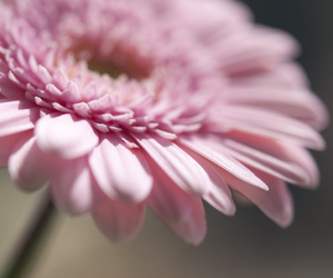 bloom, colour, and daisy image