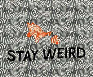 pattern, stay weird, and wallpaper image