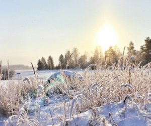 cold, nature, and field image