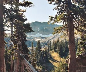 tree, forest, and mountains image