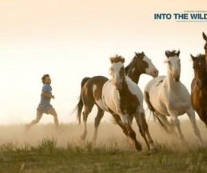 into the wild and horse image