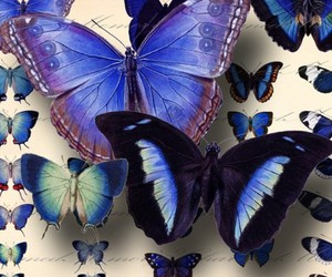 butterfly, beautiful, and blue image