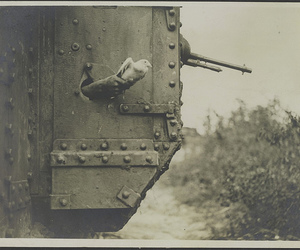 first world war, pigeon, and World War I image