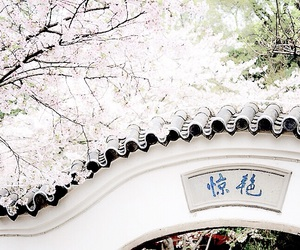 aesthetic, cherry blossom, and china image