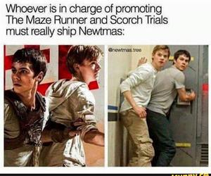 newtmas, the maze runner, and newt image