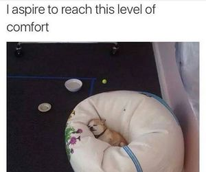 dog, comfort, and puppy image