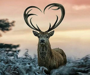 animal, nature, and heart image