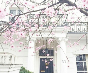 blossom, flowers, and house image