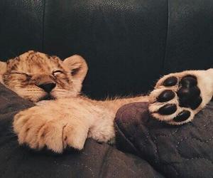 animal, cute, and sleep image