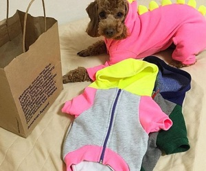 american, dog, and apparel image