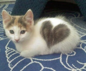 animal, heart, and cute image