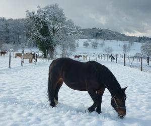 pferde, winter, and schwarzwald image