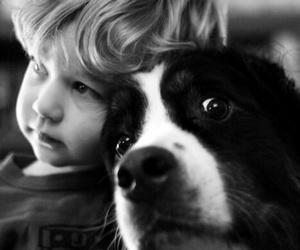 dog, cute, and kids image