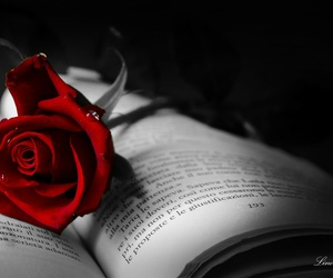 book, rose, and red image