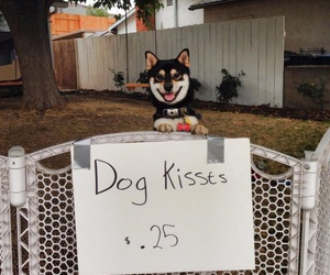 25 cents, dog, and kisses image