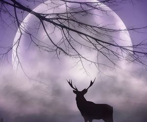 clouds, moon, and deer image