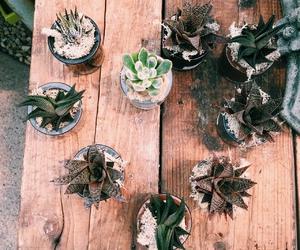 boho, cactus, and flowers image