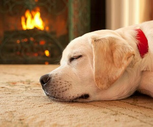 cozy, dog, and fire image