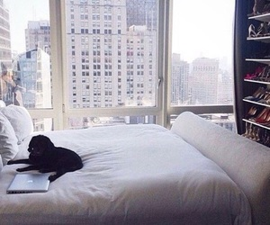 dog, bed, and room image