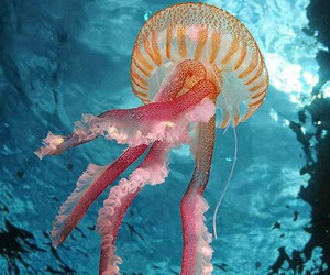 jellyfish, animal, and ocean image