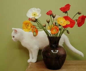 flowers, animals, and cat image