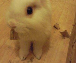 bathroom, bunnies, and bunny image
