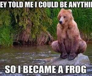 bear, funny, and frog image