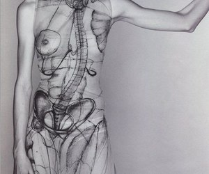 anatomy, breasts, and naked image